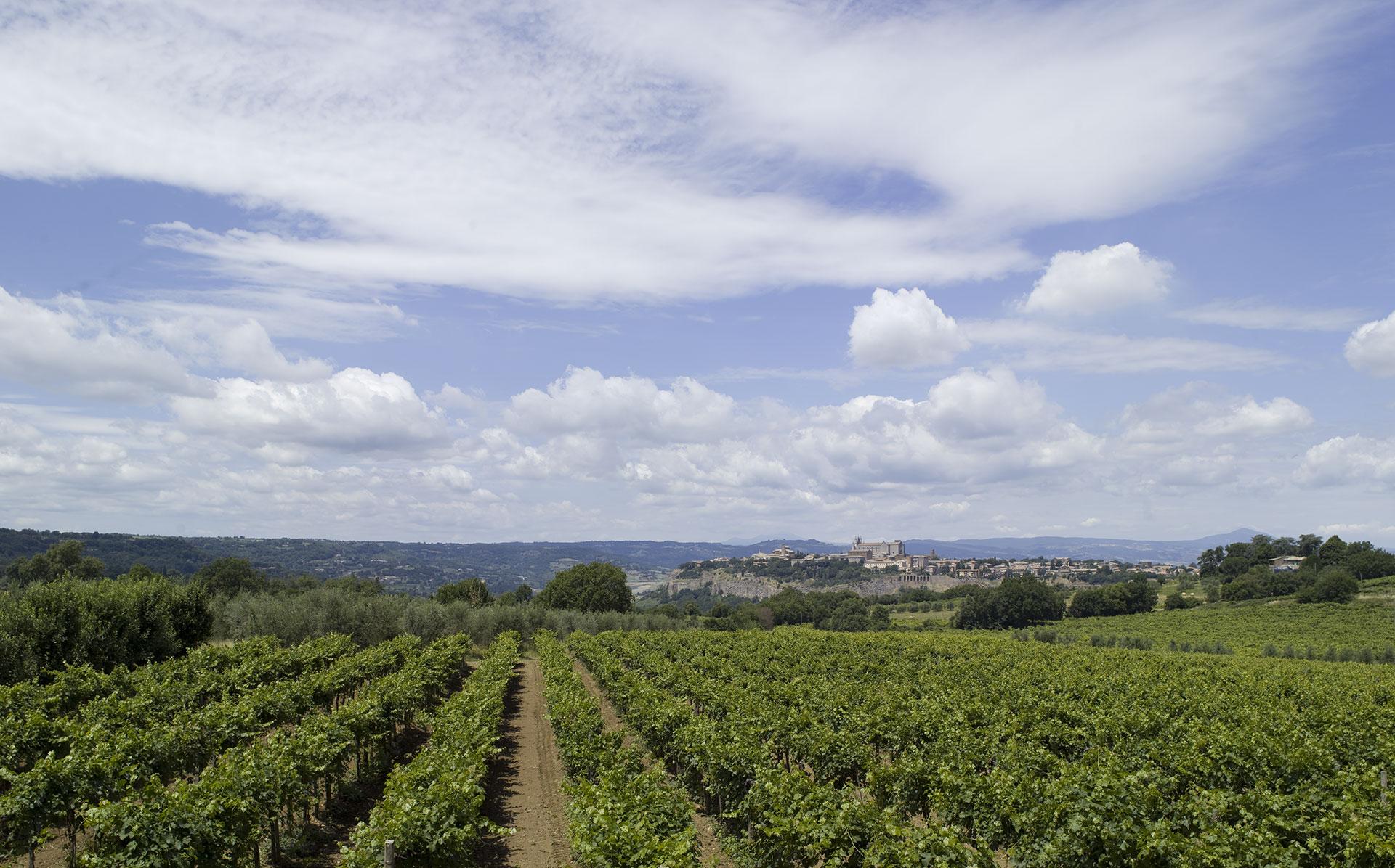 Orvieto Doc, la Regione limita le iscrizioni dei vigneti nello schedario viticolo