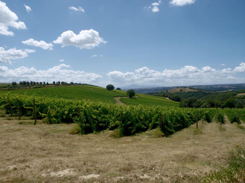 La Doc Orvieto sperimenta la trasversalità territoriale per un vino migliore