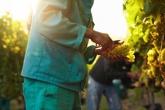 Resa per ettaro 2020, Umbria e Lazio accolgono la richiesta del Consorzio Tutela Vini Orvieto